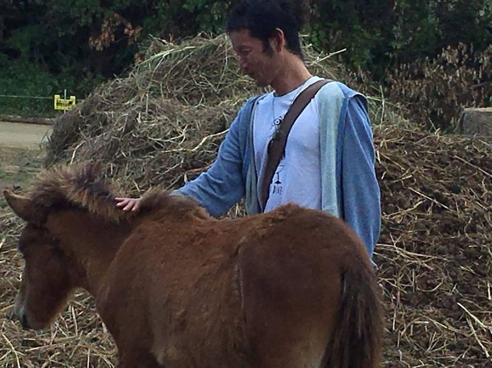 石垣島馬広場の与那国馬 ヨナグニウマがカワイイ!!