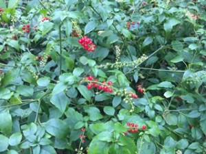 南の島の菜園日誌 畑がある暮らし 種をまいて生きること